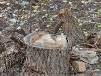 Год экологии в России. Уполномоченный добился возбуждения уголовного дела за незаконную вырубку зелёных насаждений