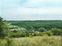 Благодаря Уполномоченному устранены экологические нарушения в особо охраняемой  природной территории «Буркинский лес» Саратовского района